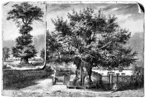 Die_Gartenlaube_(1883)_b_453